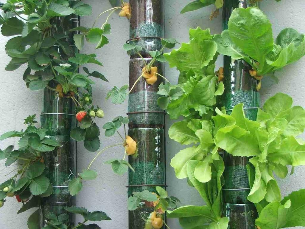 jardim vertical de garrafa pet passo a passo: pode ser feita de vários materiais, até mesmo, de garrafa PET