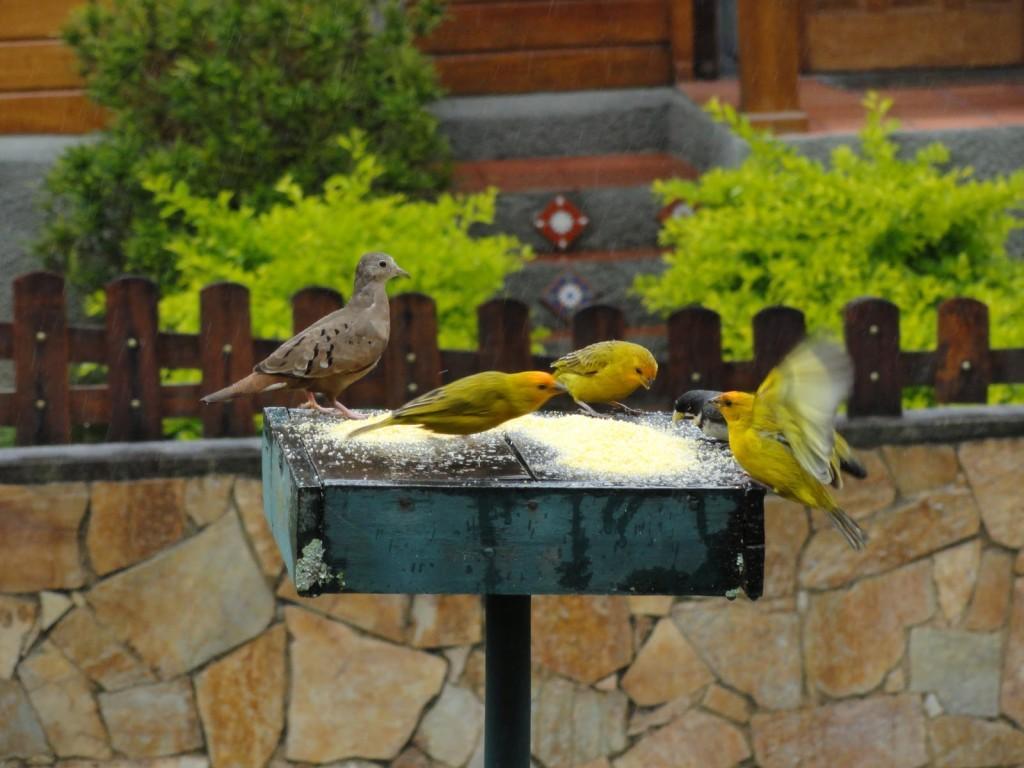 Atraindo passarinhos no seu jardim