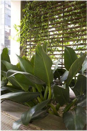 Plantas resistentes para ter em casa