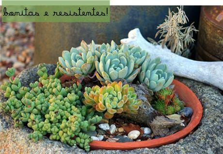 Dentro de casa paisagismo legal - Plantas resistentes al sol ...