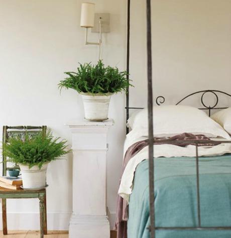 700_bedroom-ferns-gal