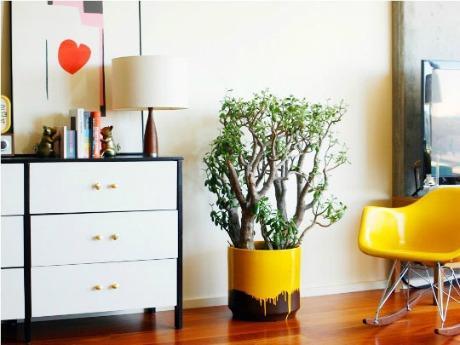 houseplants1_rect540