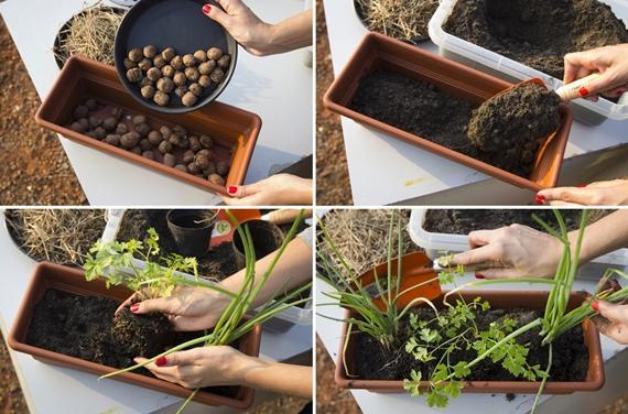jardim vertical no sol: para ter seu próprio jardim ou horta vertical em casa. Veja só