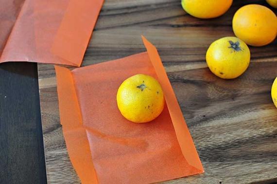 pumpkin-cuties-craft-1