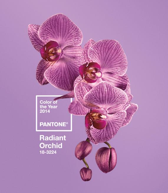 A cor de 2014 segundo a Pantone