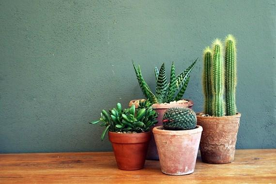 Decore a casa com suculentas