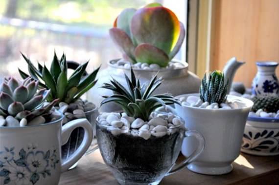 Plantas decorando xícaras antigas