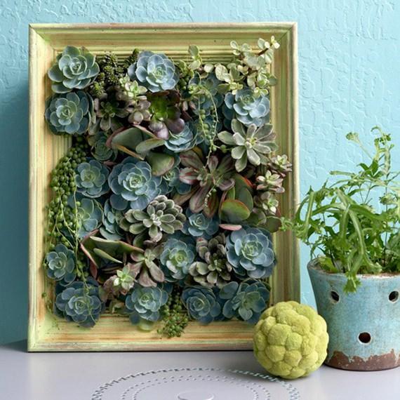Decore sua parede com um quadro de suculentas