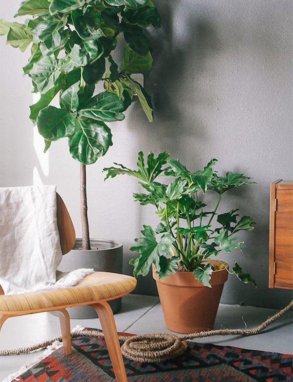 Decore sua casa com plantas neste verão