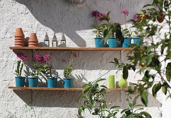 Plantas na vertical